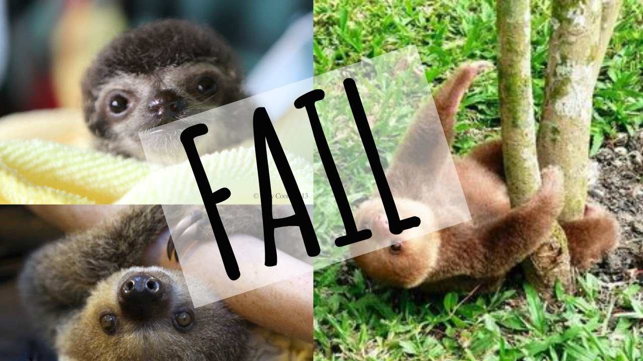 Sloth Fail Compilation - YouTube