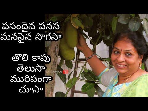 Amazing Jackfruit In My Garden- Jackfruit Plant / Home & Garden/Village Food