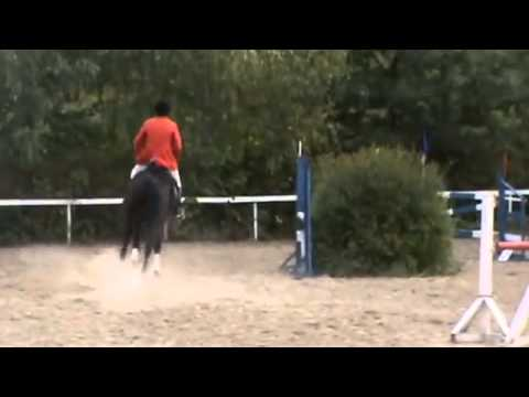 Купить и продать лошадь в казахстане можно на сайте объявлений market. Kz: актуальные предложения купли-продажи лошадей с ценами.