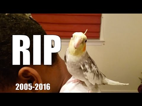 My Bird Died :( Tribute Video For Flappy