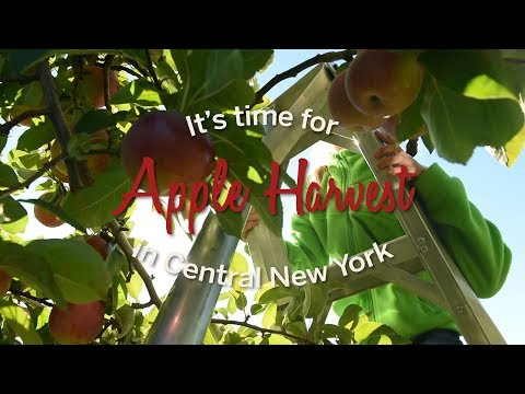 Justin The Web Guy - Cornell Experts Say This Year's Apple Crop Will Be Bigger And Redder!