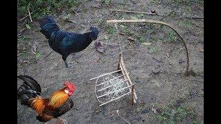 Creative Wild Chicken Trap-Amazing Quick Chicken Trap in Forrest-Best Bird Trap in Cambodia