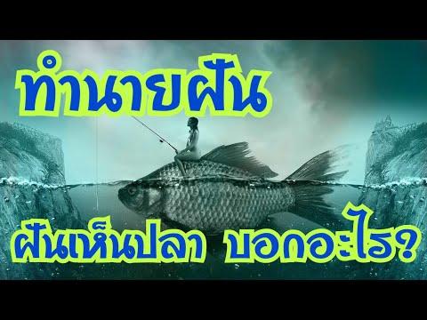 ทำนายฝัน ฝันเห็นปลา เลขนำโชค /ดวงดีทำนายฝัน