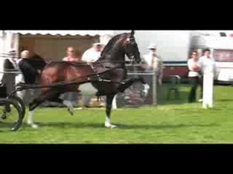 "The Spectacular Rare "" Hackney Horse"""