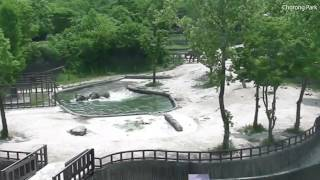 In the Seoul zoo, two elephants rescued a drowned elephant in the pool