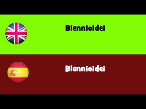 FROM ENGLISH TO SPANISH = Blennioidei