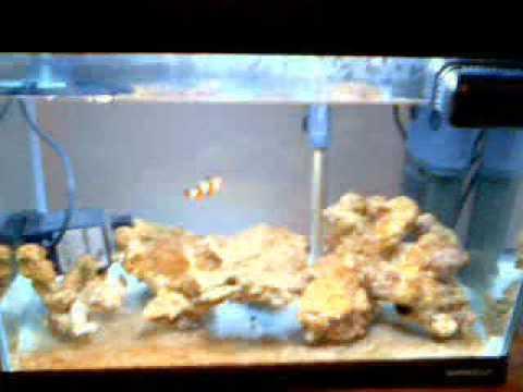 il mio piccolo e modesto acquario marino youtube