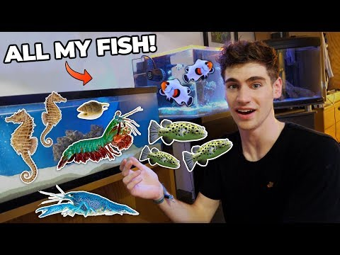 ALL MY FISH & RARE EXOTIC ANIMALS!!! (dorm Room Tour)