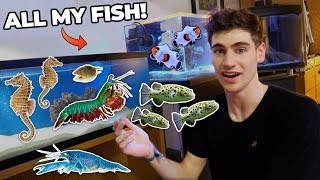 all-my-fish-rare-exotic-animals-dorm-room-tour