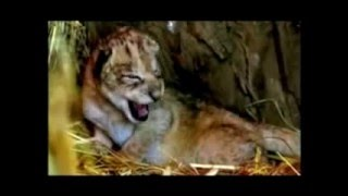 WWF COMMERCIAL YOU ARE SO BEAUTIFUL BY DEWI PECHLER
