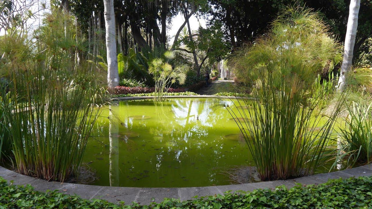 Botanical garden tour puerto de la cruz tenerife canary islands youtube - Botanical garden puerto de la cruz ...