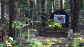 В Первомайском лесу оборудуют официальное кладбище домашних животных