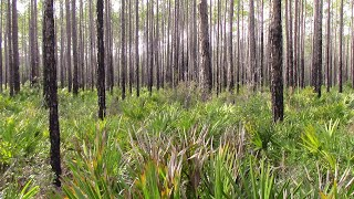 Dispersed Hammock Camping Floŗida Swamp