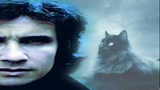 UN GATO EN LA OSCURIDAD   ROBERTO CARLOS Disco Un gato en la oscuridad 1972