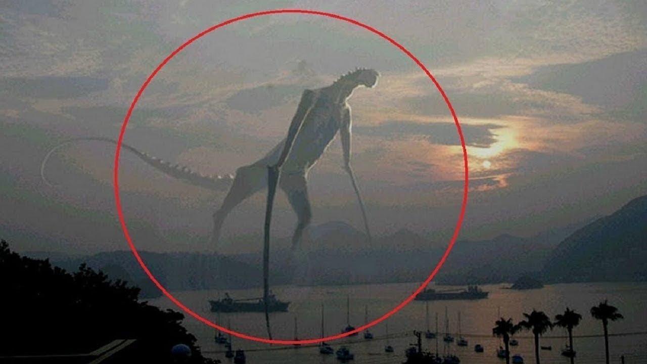5 Misteriosas Criaturas Captadas en Camara - YouTube Real Sightings Of Monsters