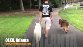 Off Leash Heeling And Loose Leash Walking | German Shepherds | Dog Training Atlanta
