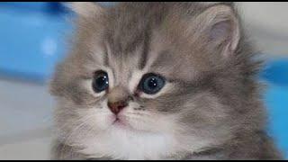 Смешные животные Кошки Собаки Позитив Создай себе хорошее настроение