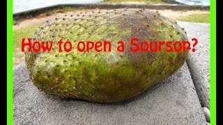 How to cut and eat Soursop?