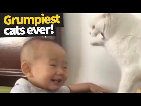 Grumpy Cat Compilation | Celebrating the Legacy of the Original Grumpy Cat