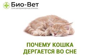 Кошка Дергается Во Сне&Почему Кошка Дергается Во Сне. Ветклиника Био-Вет