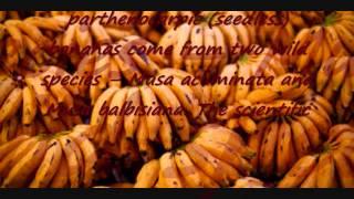 banan,Engkanto AND BANANA Hamon !! | Miszczelendż # 1