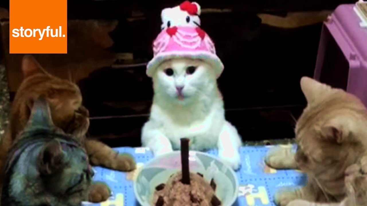 Cat Celebrates Birthday In Style