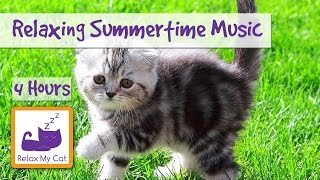 Relaxing and Cooling Summertime Cat Music! Music to Relax Cats in the Summer!