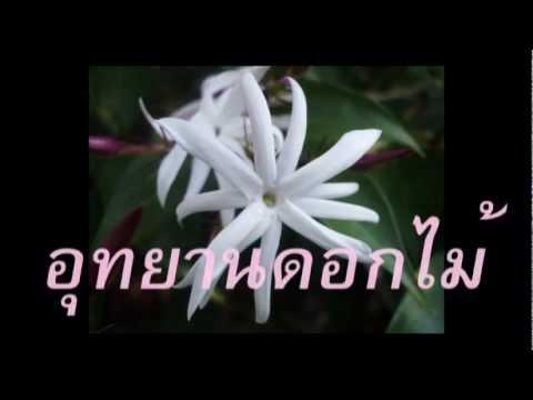 อุทยานดอกไม้  อรวี สัจจานนท์