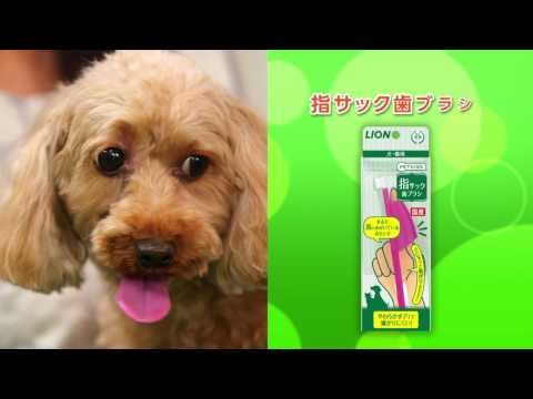 犬の歯みがき方法_5分19秒