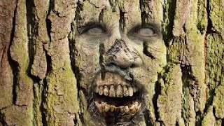 Scientists Have Discovered an Insane Zombie-Like Tree Thats Inhabiting
