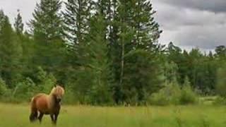 a Yakut Horse - Vanya Trofimov