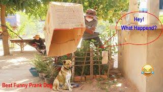 Best Prank Super Huge Box vs Prank on sleep Dog Stuck in Box very Funny prank dog@Mister FunTube