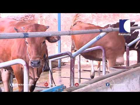 To Build a Small scale Cattle - Pig Farm with Success Stories | Haritham Sundaram 29-07-2016