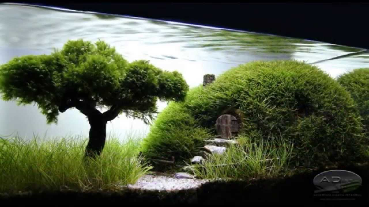 Bonsai aquascape youtube - Design aquasacpe ...