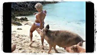 СВИНЬЯ КУСАЕТ ДЕВУШКУ, приколы с животными подборка | Funny Animals compilation #627