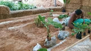 การทำโมเดลโคกหนองนา วิถีชีวิตเกษตรพอเพียง#โคกหนองนา