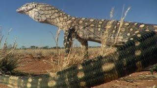 Động vật đột biến ở Australia - HD Thuyết minh tiếng việt