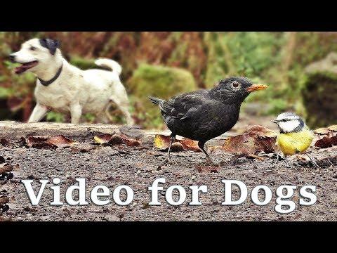 Videos for Dogs – Autumn Birds