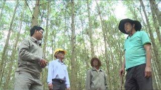 Ươm mầm cho trồng rừng bền vững ở Việt Nam