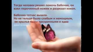 Урок бабочки притча