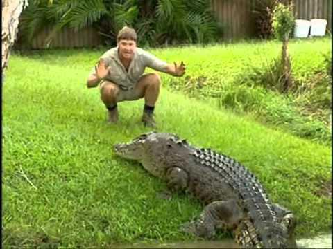 Steve Irwin's most dangerous adventures part 6