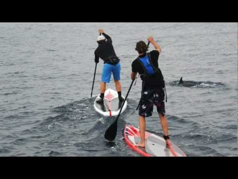 Crossing the Srait of Gibraltar on a SUP