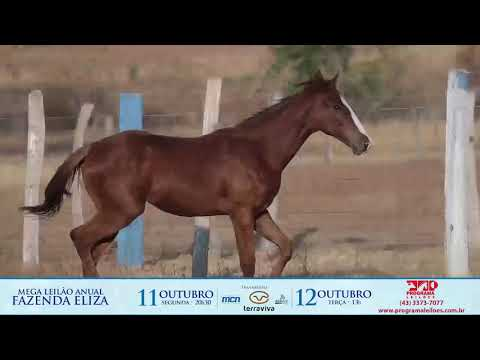 lote 1003 - EQ MONEY RED FISHERS
