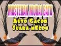 Masteran Murai Batu Auto Gacor Suara Merdu  Mp3 - Mp4 Download