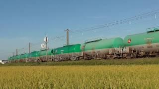 稲穂輝く白鳥信号場を行く8075レ貨物列車