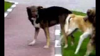 futai in 3 intre 3 caini cu super puteri :))