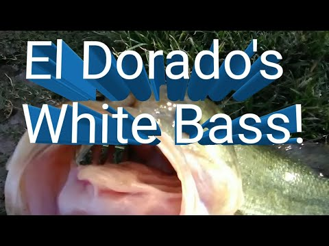 Bass Fishing El Dorado Park Scottsdale, AZ October 19, 2018