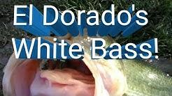 Bass Fishing El Dorado Park Scottsdale, AZ October 19, 2018