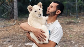 PLAY TIME with NEWBORN WHITE LION CUB!!