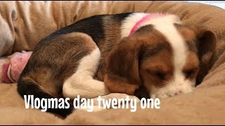 Vlogmas day tweny one: how I get ready quick while taking care of my new puppy | LOVE HAILEY